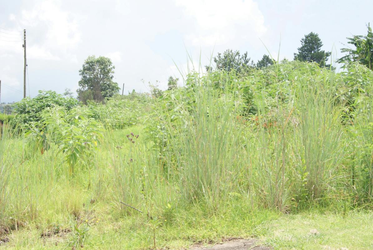 Nkonyeni Property For Sale