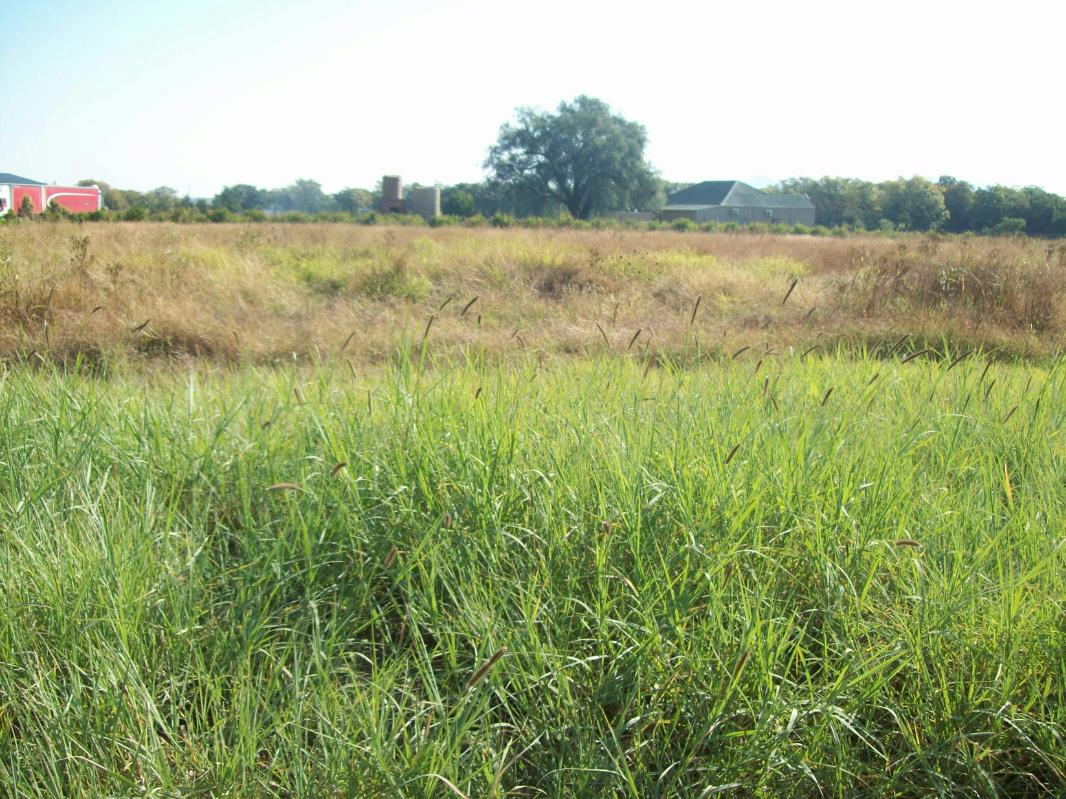 1.2 hectare vacant land for sale in Brits
