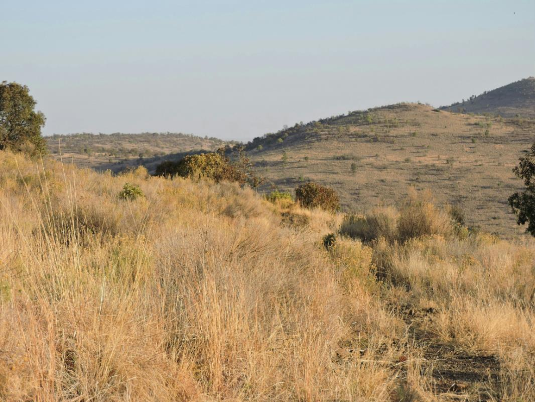 1262.9 hectare game farm for sale in Swartruggens