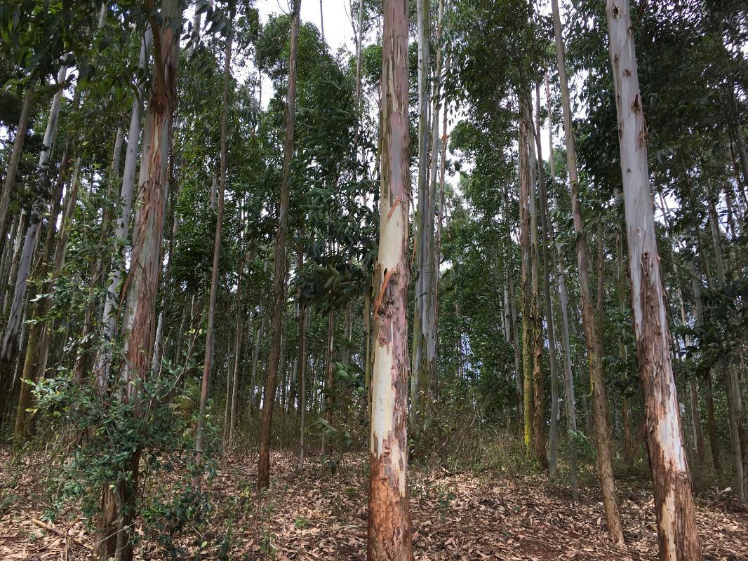 10 acres vacant land for sale in Karen (Kenya)