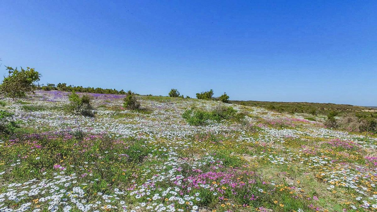 713 m² vacant land for sale in Shark Bay