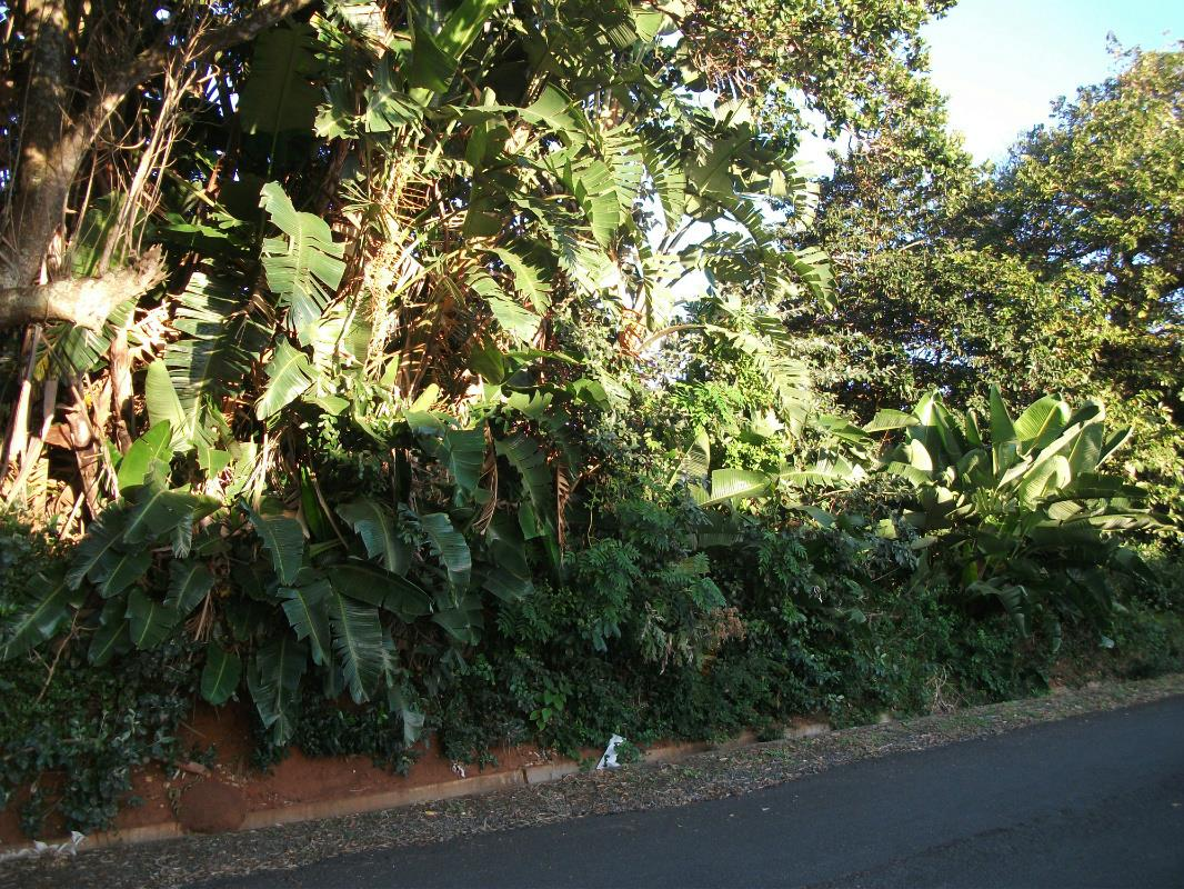 1895 m² residential vacant land for sale in Trafalgar
