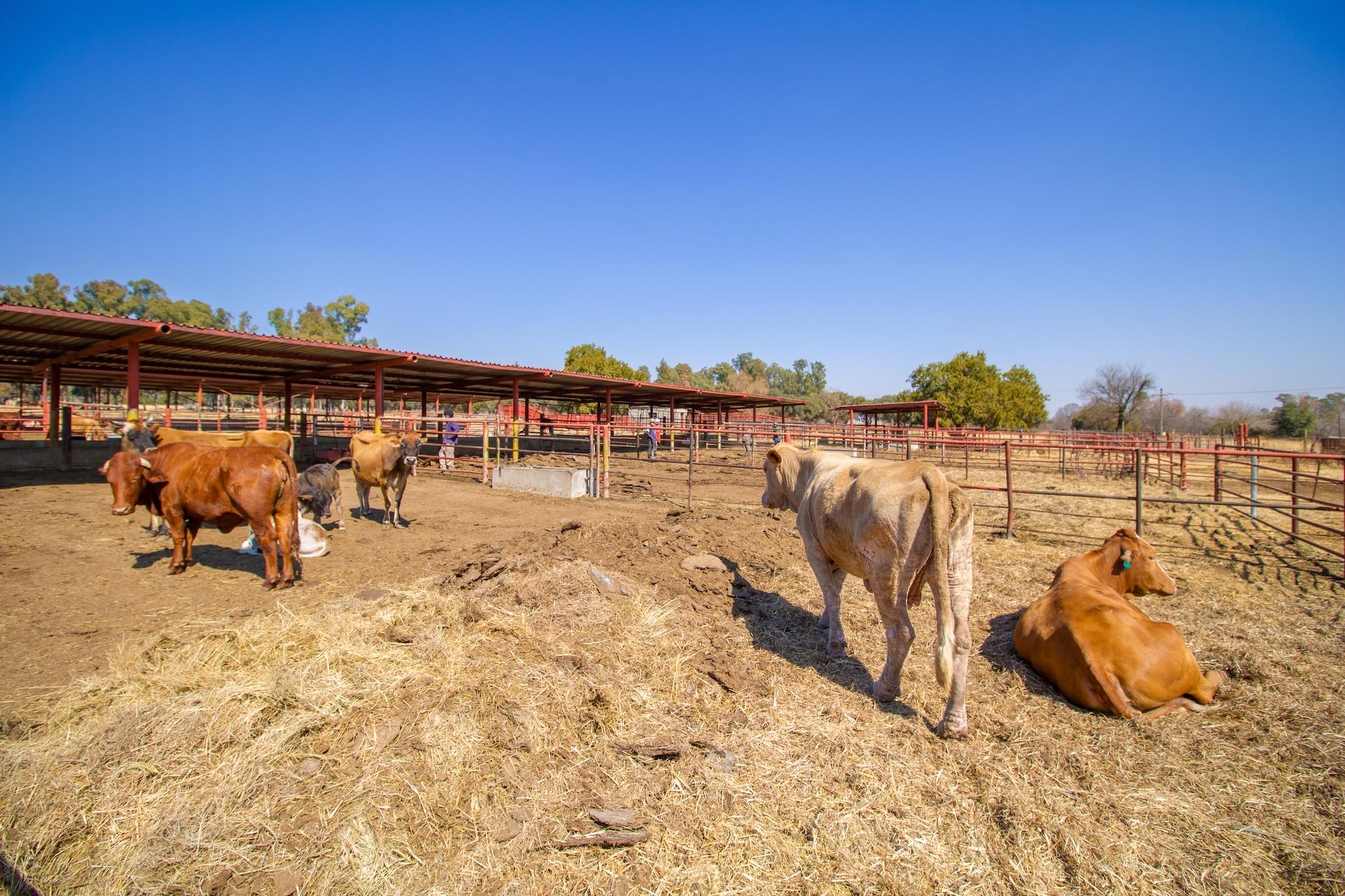27 hectare mixed use farm for sale in Skeerpoort