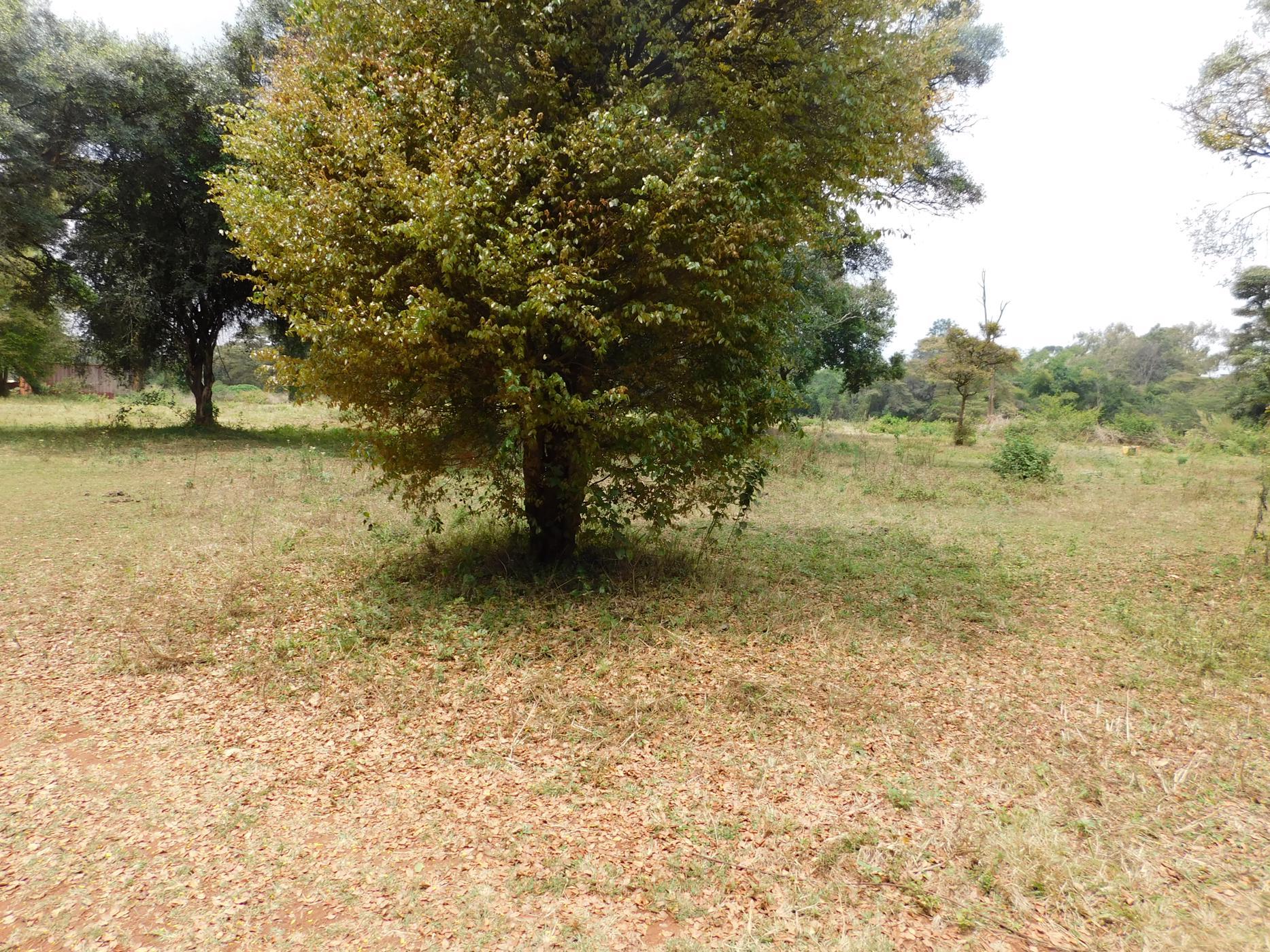 9 acres vacant land for sale in Karen (Kenya)