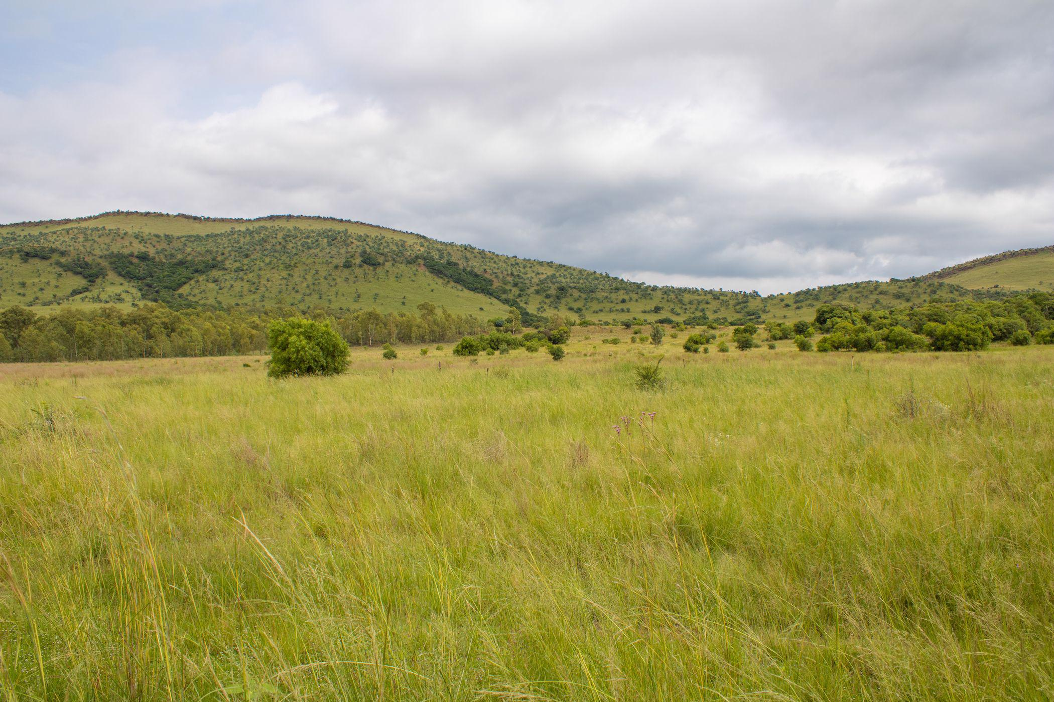 92 hectare mixed use farm for sale in Broederstroom