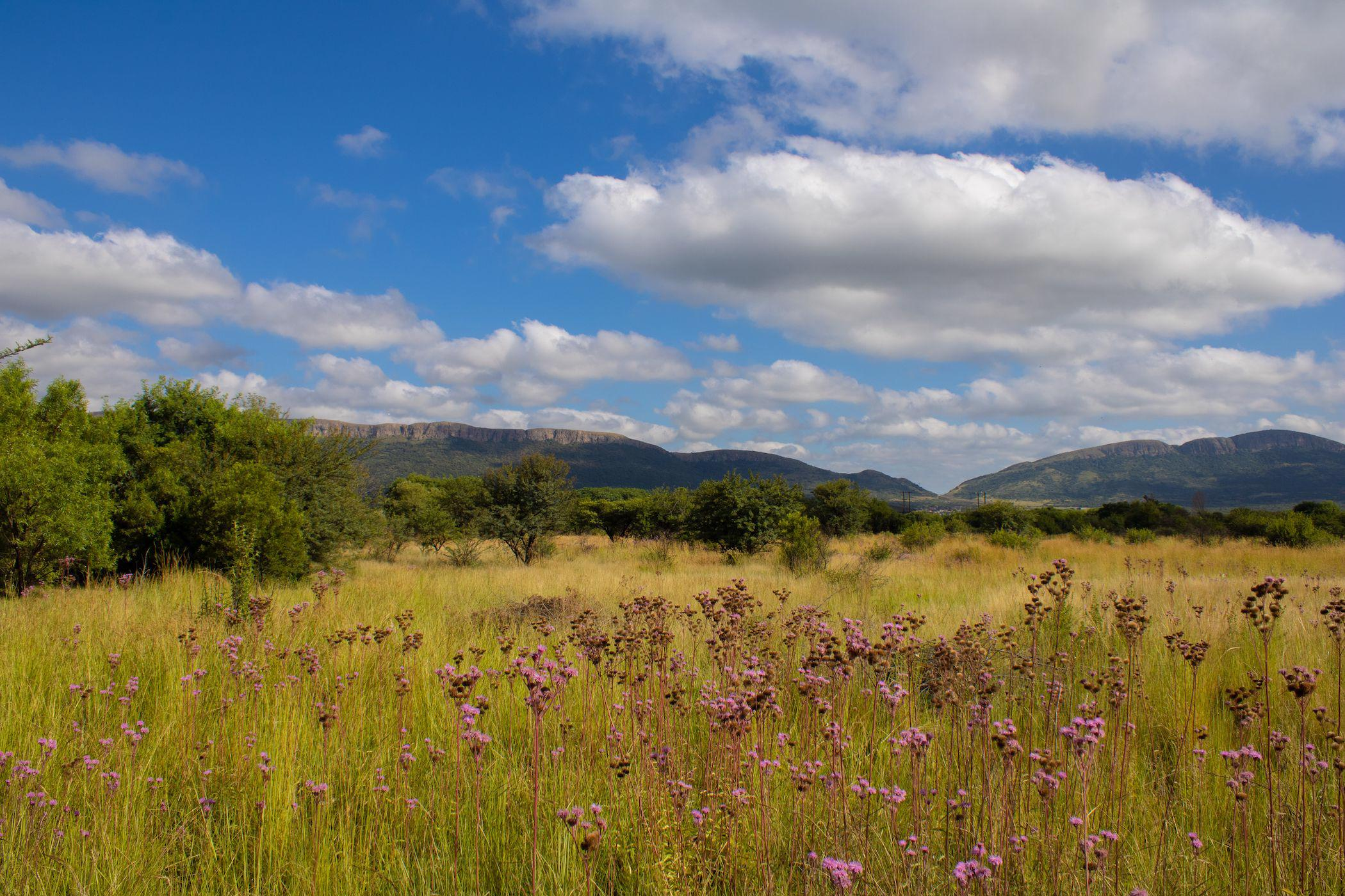 22 hectare mixed use farm for sale in Hartbeespoort