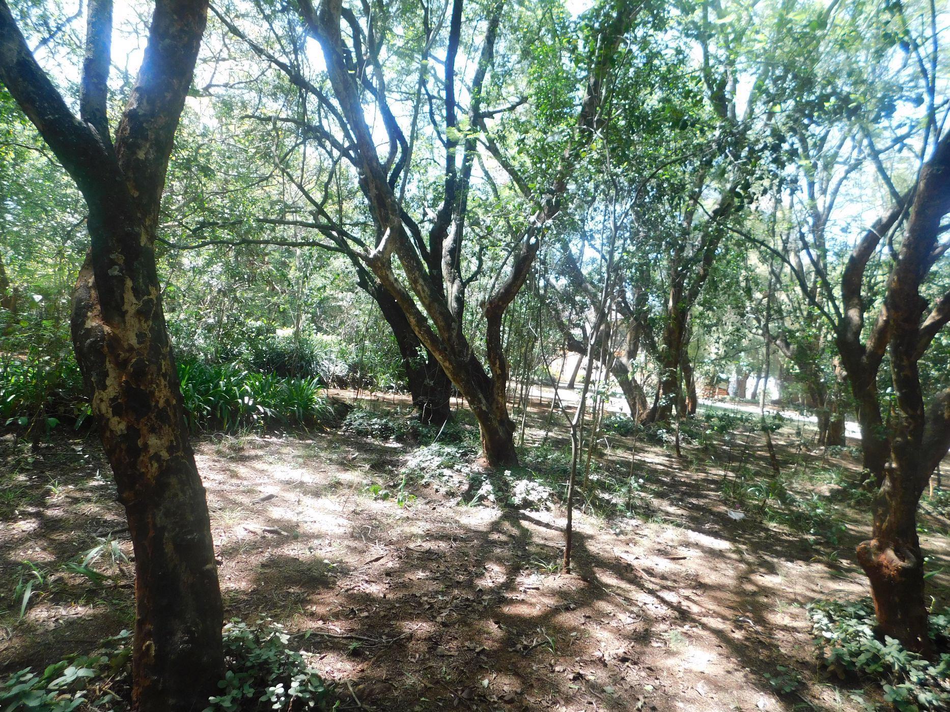 5.1 acres residential vacant land for sale in Karen (Kenya)