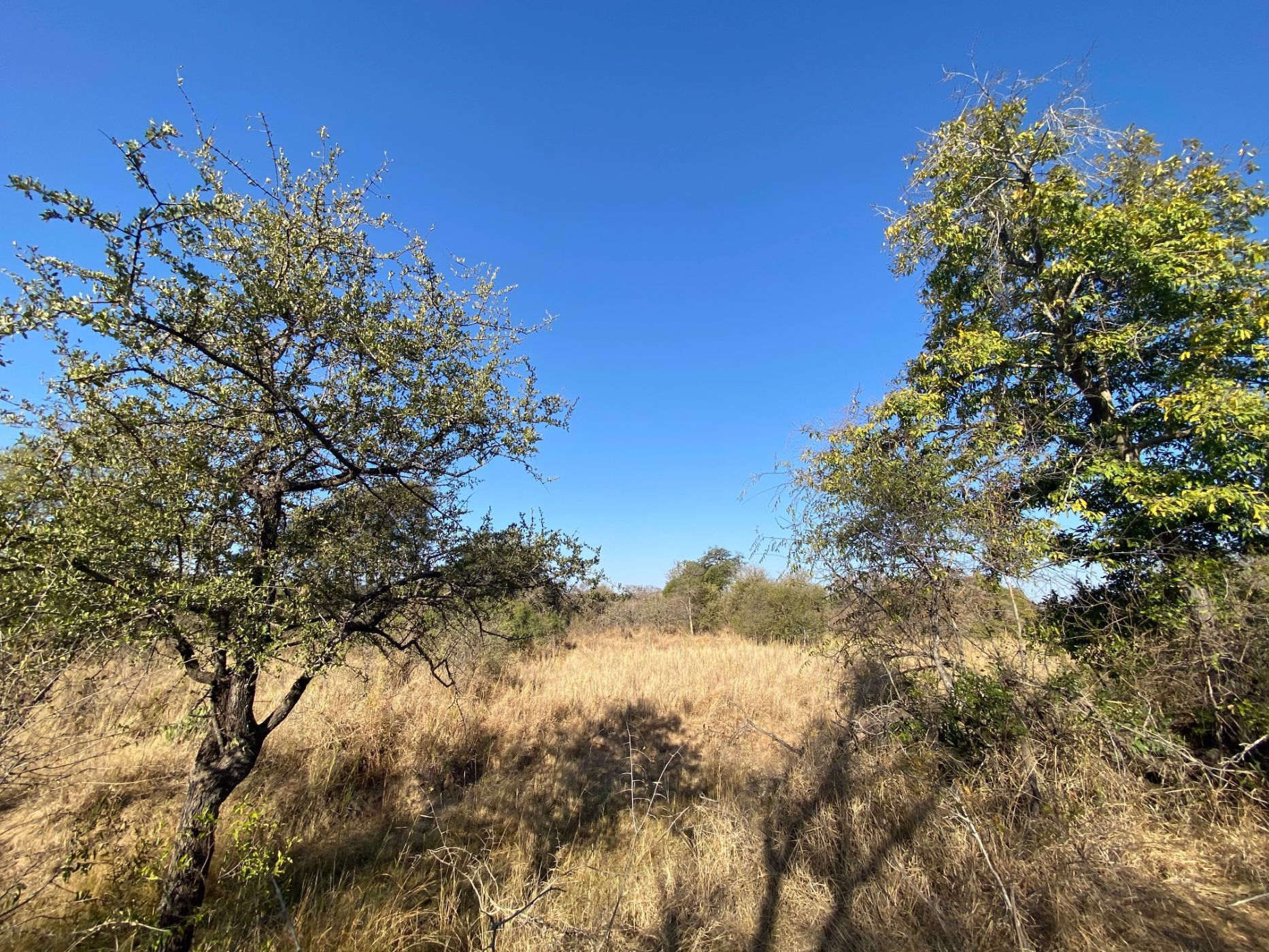 1841 m² vacant land for sale in Moditlo Nature Reserve