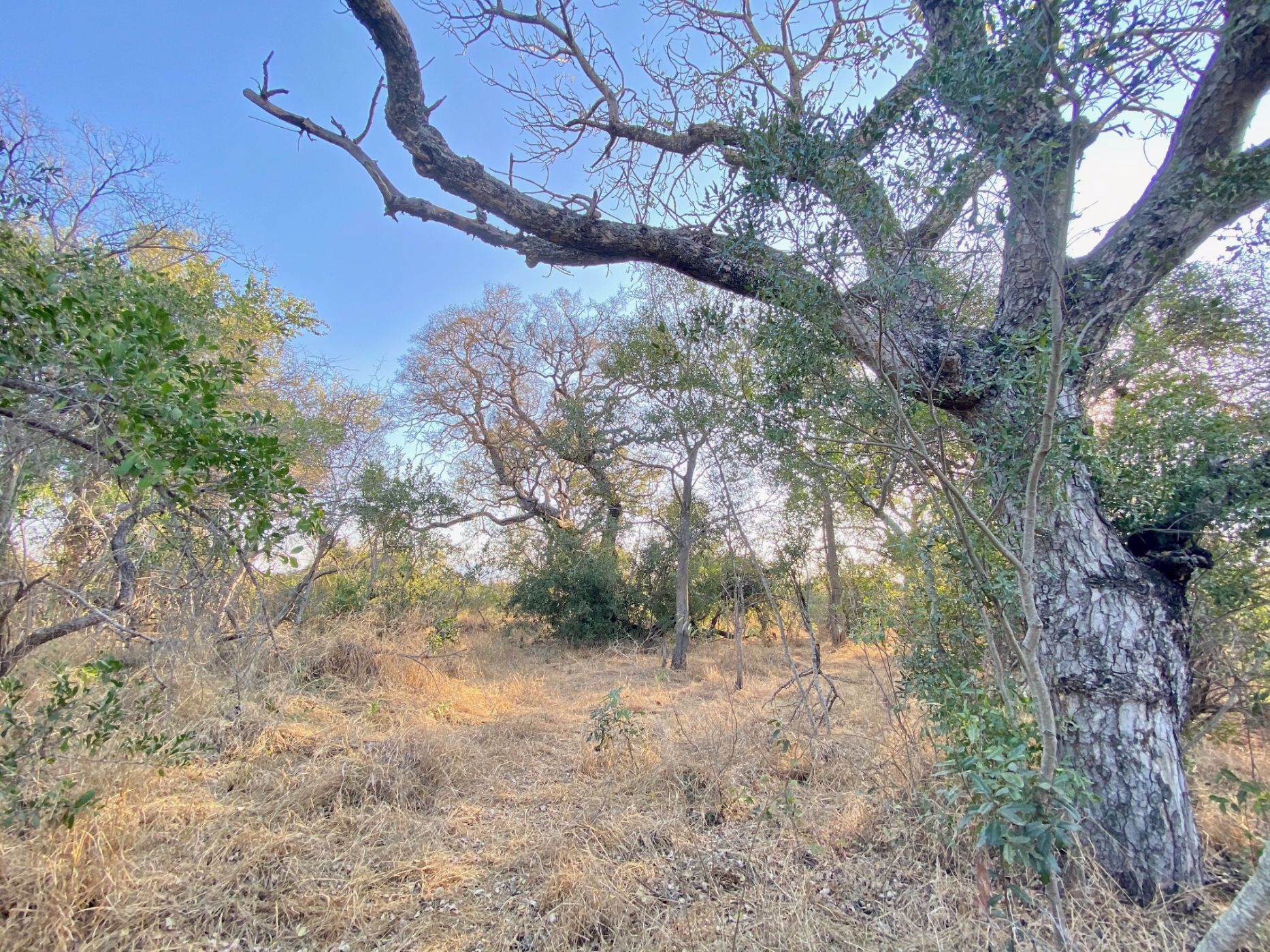 8114 m² vacant land for sale in Moditlo Nature Reserve